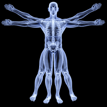 Anatomie Vivante
